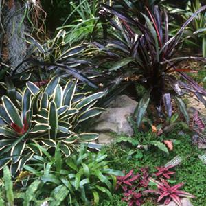 interior bromeliads