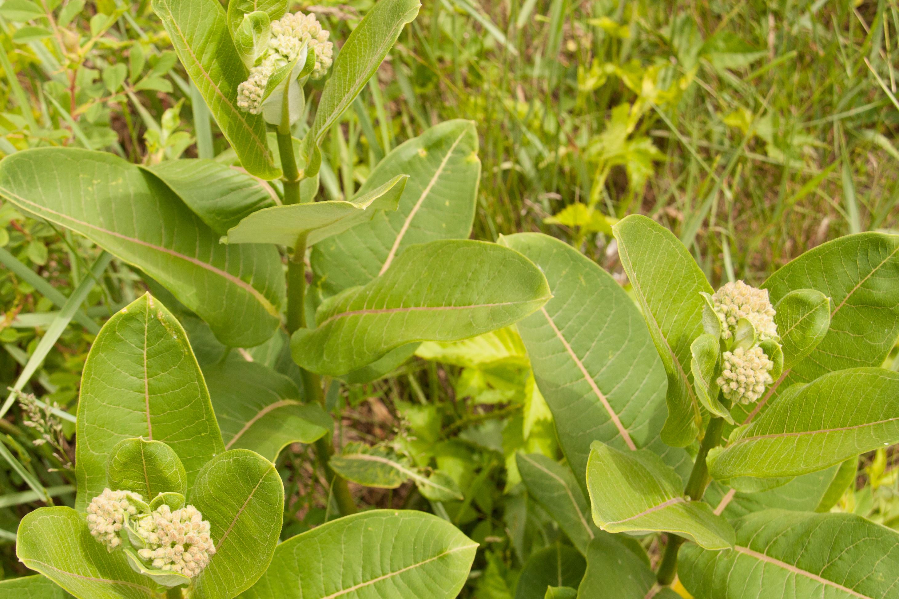 milkweed Milkweed is the brainchild of our amazing neighbors, jen and eric from cooks' house we've built them a kitchen because everyone should eat more of their food this is your opportunity to enjoy their.