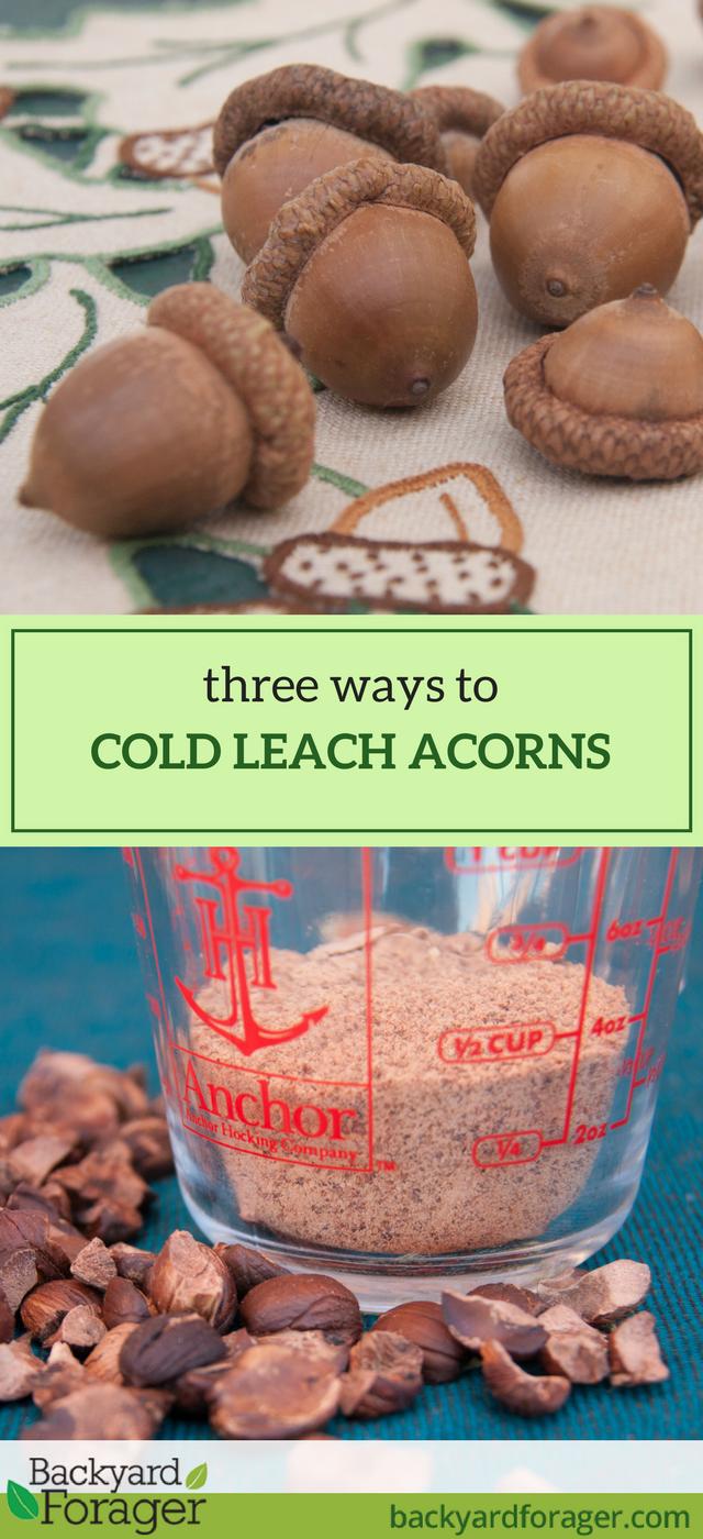 cold leaching acorns
