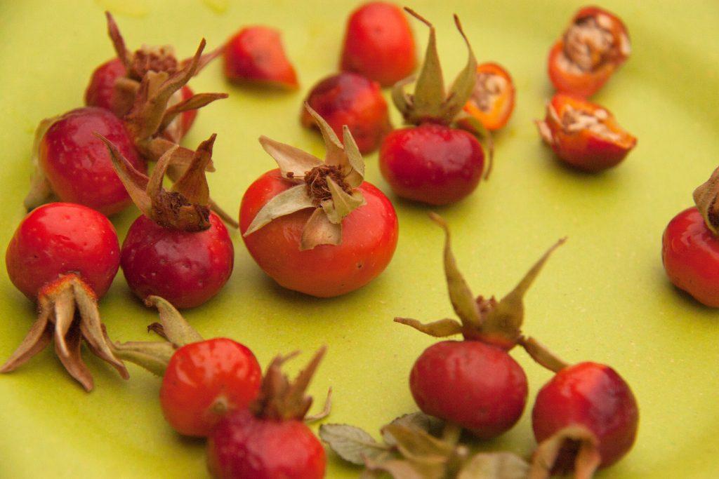 ripe rose hips
