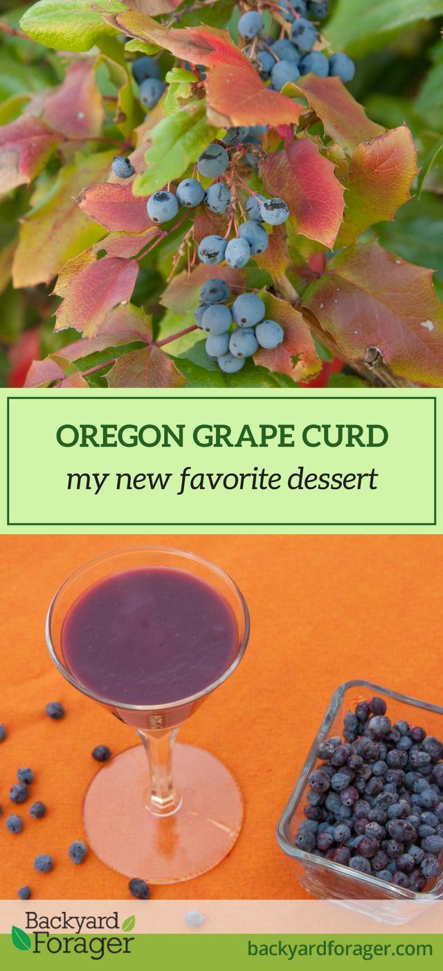 oregon grape curd, mahonia curd