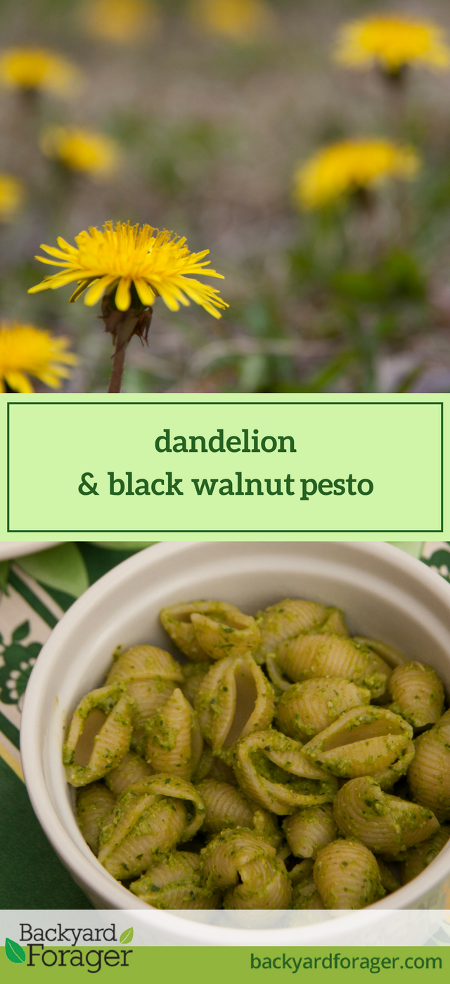 dandelion & black walnut pesto
